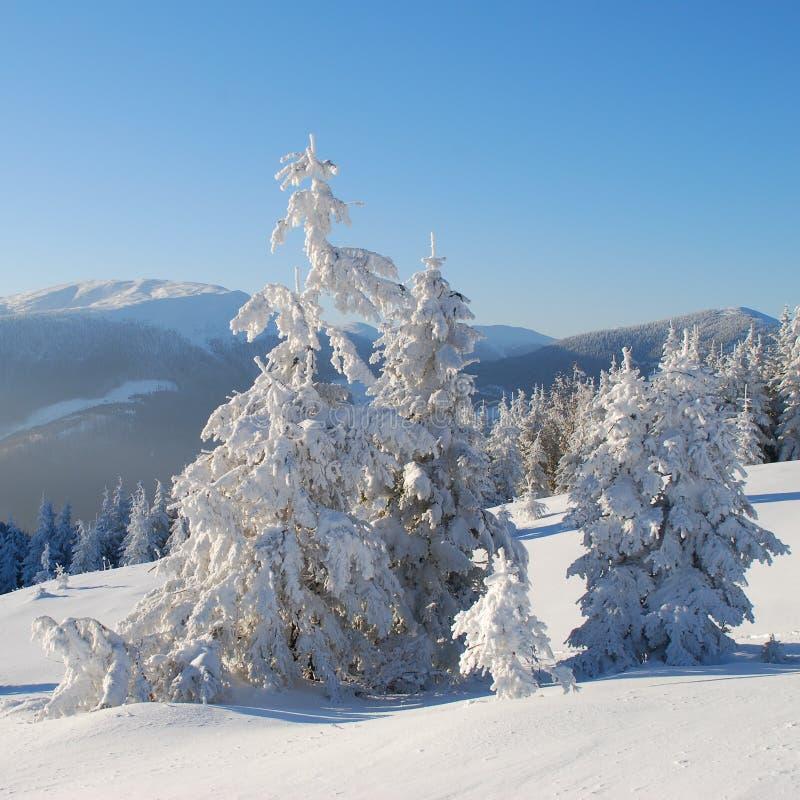 Download Vinter i berg arkivfoto. Bild av back, barrträd, överkant - 27282634