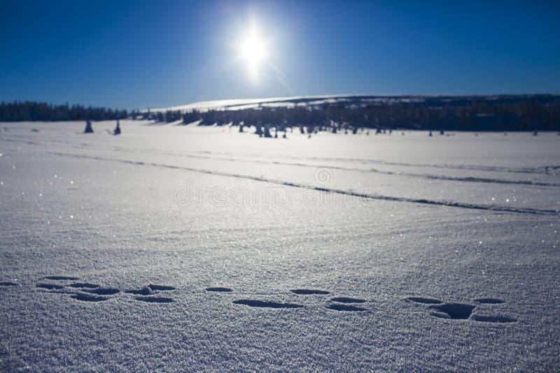 Vinter i bergen arkivbilder