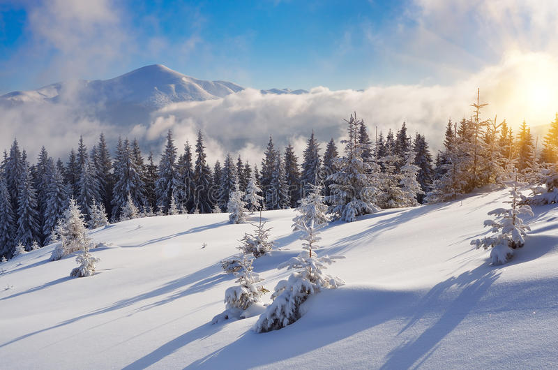 Vinter i bergskogen royaltyfri fotografi