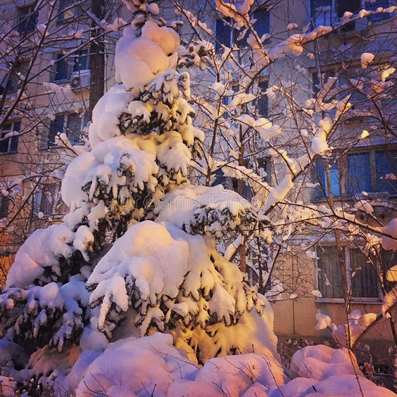 Vinter i Bucharest royaltyfri fotografi