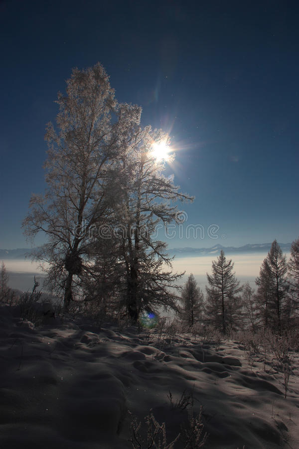 Vinter i de Altai bergen arkivfoton