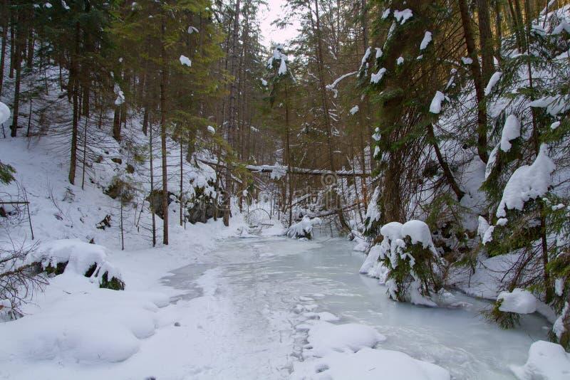 Vinter i Piecky, slovakisk paradisnationalpark, Slovakien arkivbilder