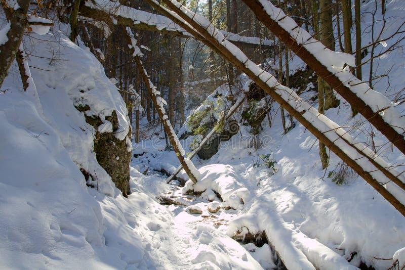 Vinter i Piecky, slovakisk paradisnationalpark, Slovakien royaltyfria foton