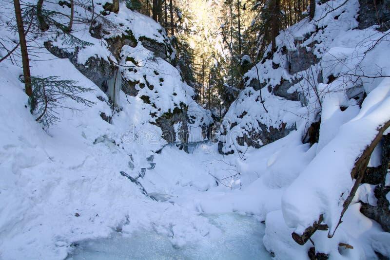 Vinter i Piecky, slovakisk paradisnationalpark, Slovakien royaltyfri fotografi