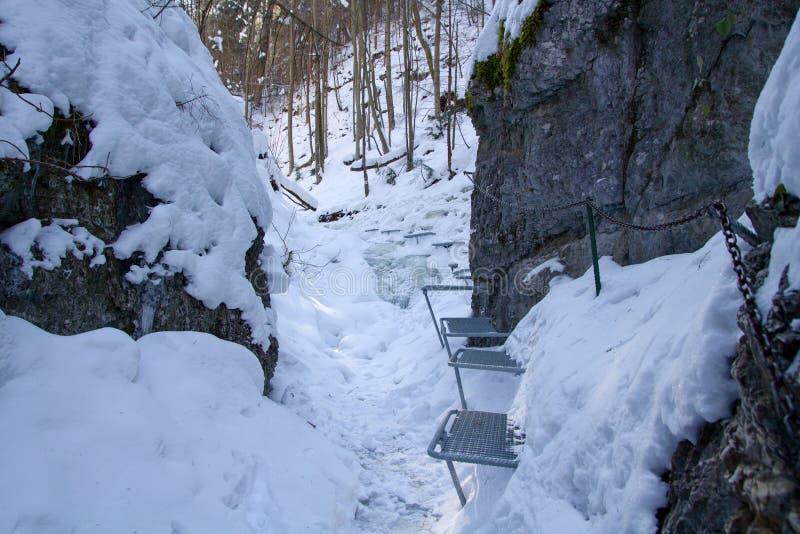 Vinter i Piecky, slovakisk paradisnationalpark, Slovakien royaltyfria bilder