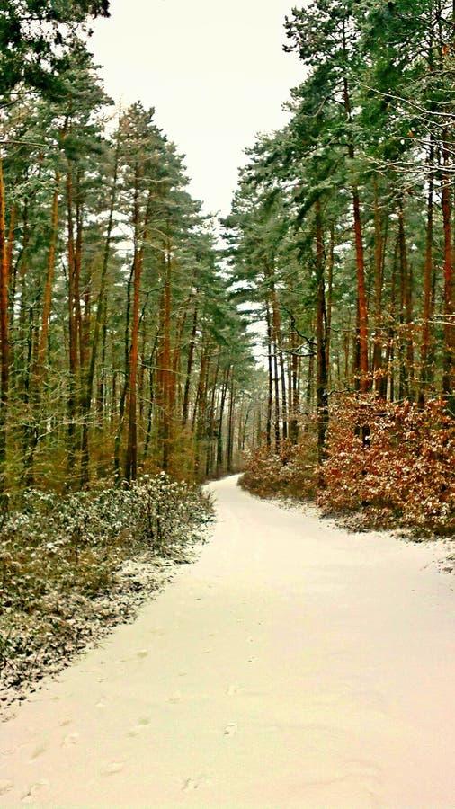 Vinter i skog arkivfoton