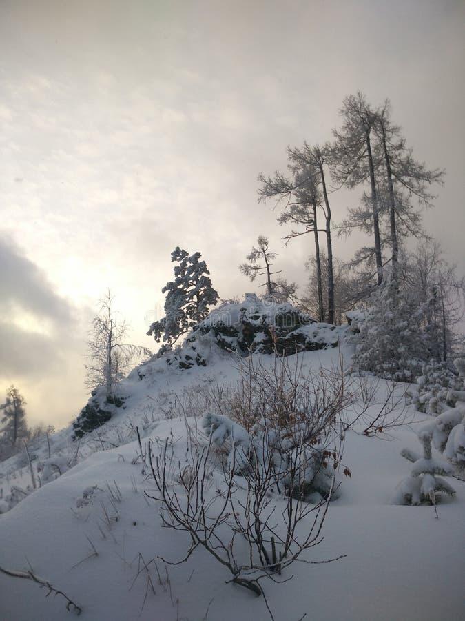 Vinter i skogen arkivfoto