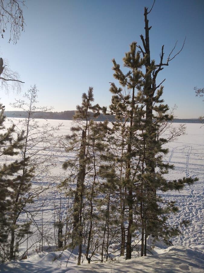 Vinter i skogen royaltyfria foton