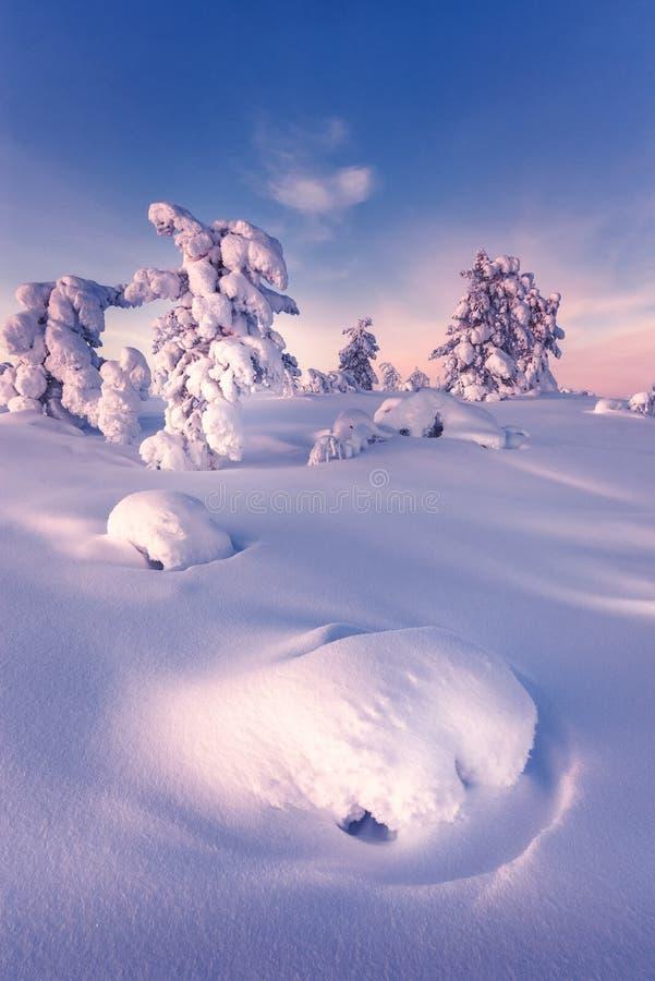 Vinter i taigaskogen arkivfoto