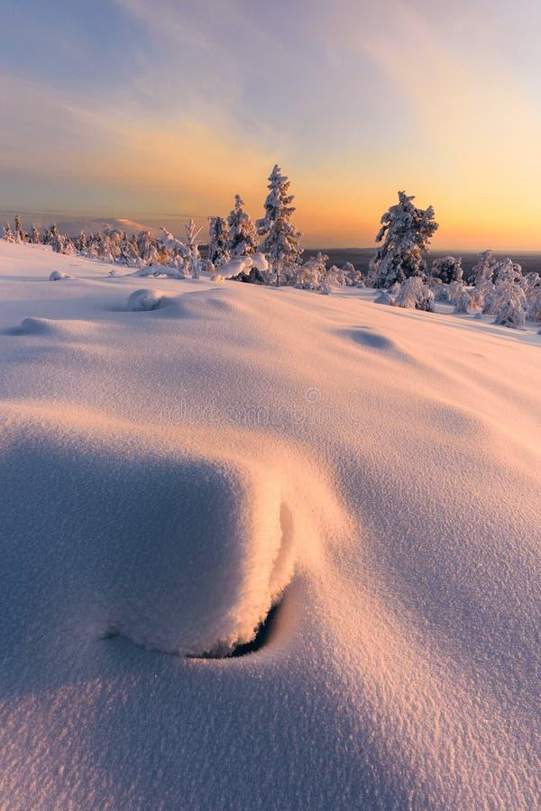 Vinter i taigaskogen royaltyfria bilder