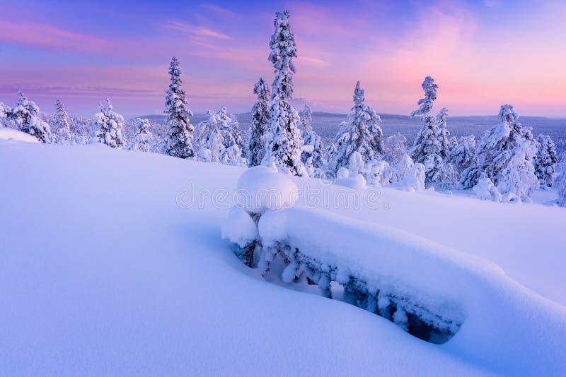 Vinter i taigaskogen royaltyfri foto