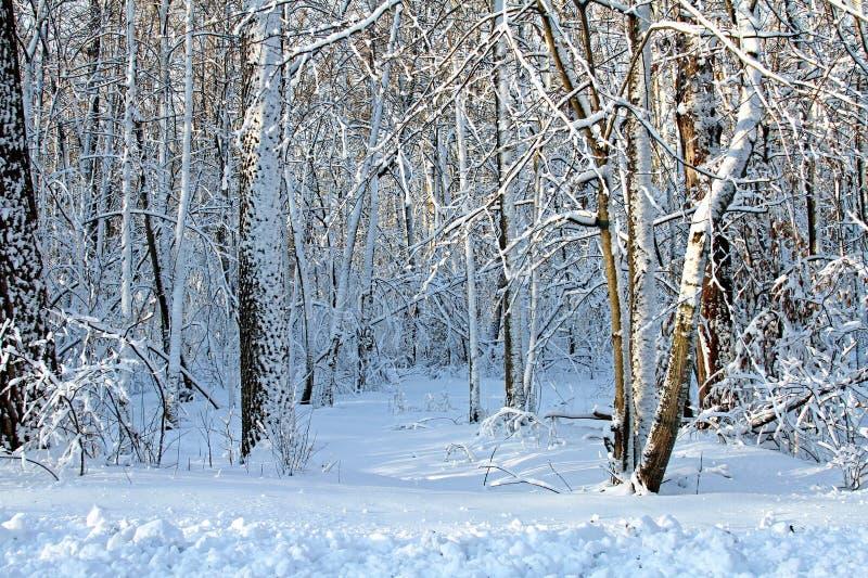 Vinter i träna arkivbild