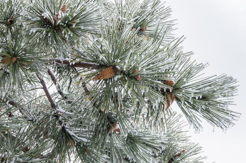 Vinter. Isläggning. royaltyfri foto