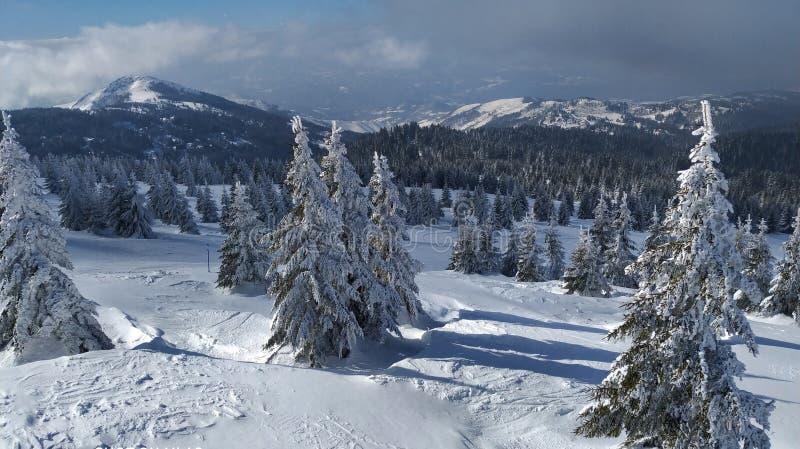 Vinter på det serbiska berget Kopaonik royaltyfri fotografi