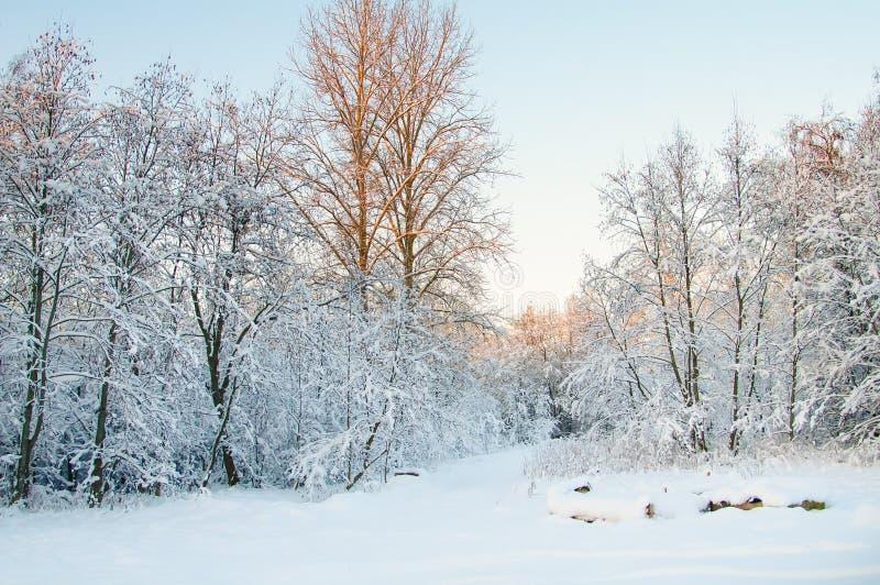 Vinter, rimfrost och rimfrost på träd arkivfoto