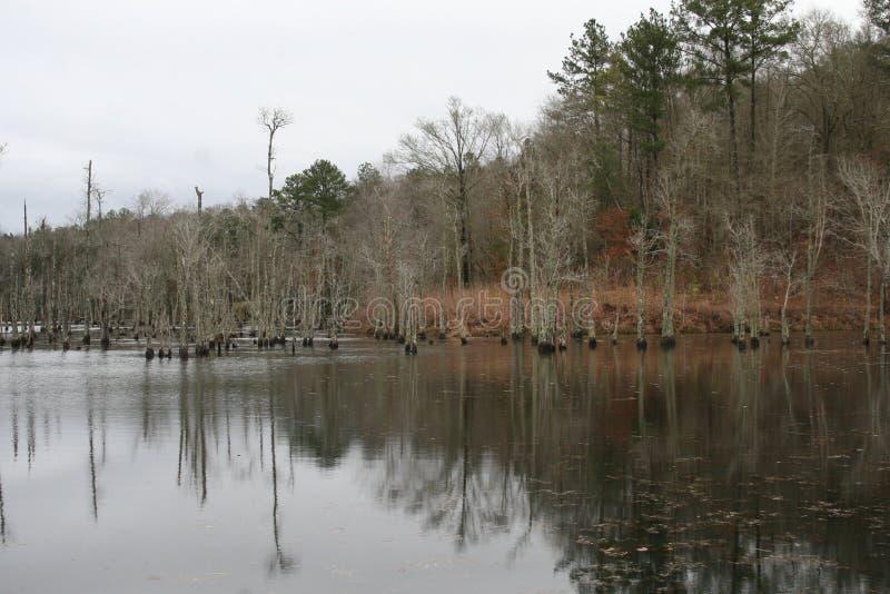 Vinter sjö Forest In Alabama 2019 II arkivfoto