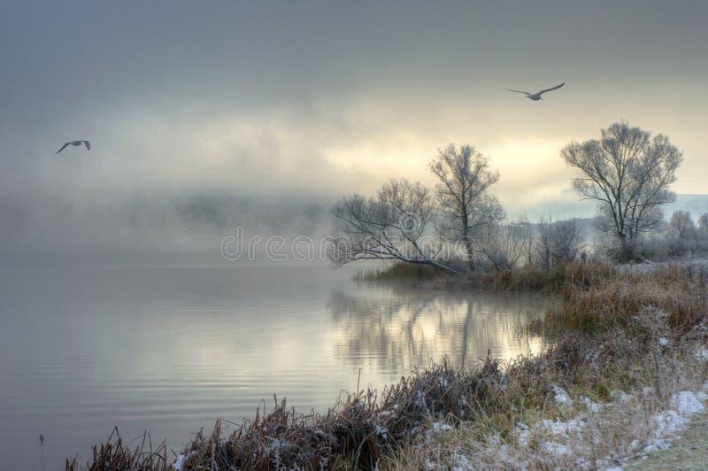 Vinter sjö med flygfåglar royaltyfri fotografi