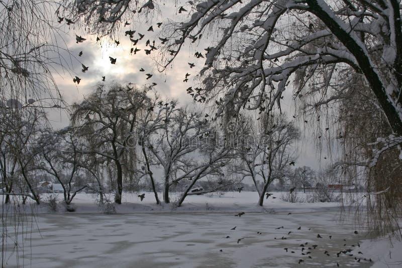 Vinter, sjö och fåglar royaltyfria bilder