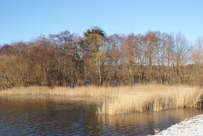Vinter sjöträd och gräs royaltyfri foto