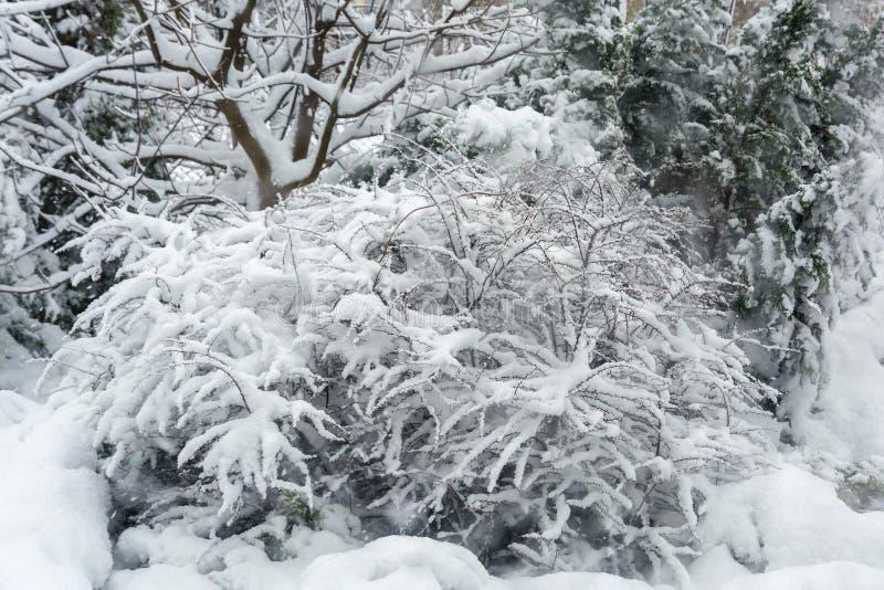 Vinter snöfall i trädgården Snö-täckt trädgård arkivbilder