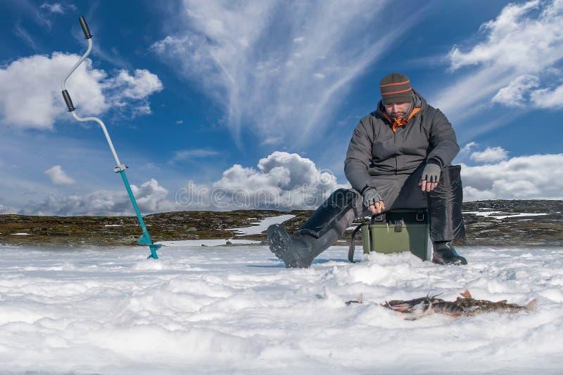 Vinter som fiskar begrepp Fiskare i handling Fånga sittpinnefisken från snöig is på sjön ovanför soldaten av fisken Dubbel sikt u arkivfoto
