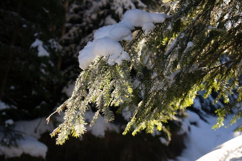 Vinteraff?rsf?retag Översikt av Carpathiansna carpathians ukraine royaltyfri foto