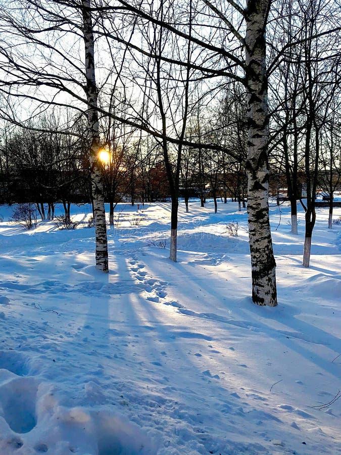 Vinterafton i parkera fotografering för bildbyråer