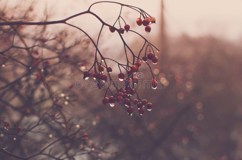 Vinterbär efter regnet arkivfoto