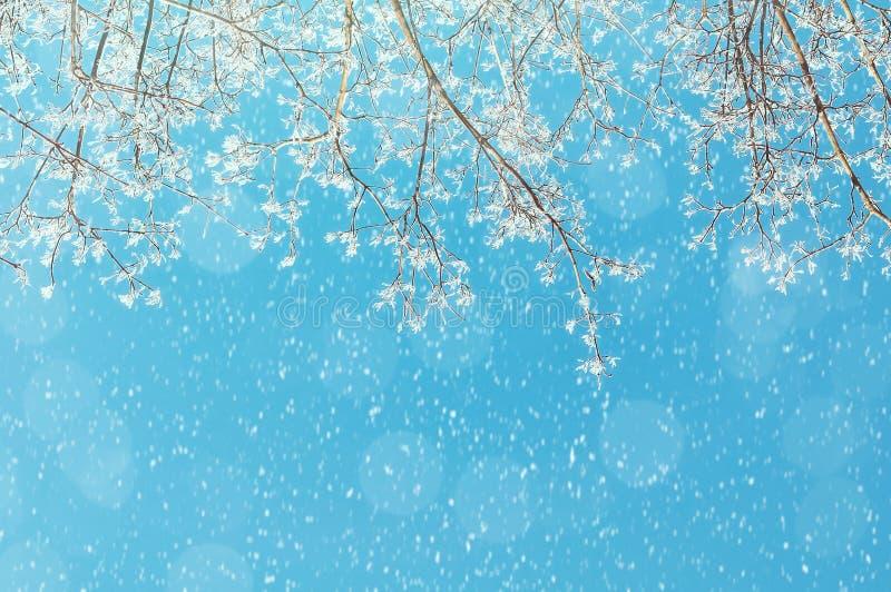 Vinterbakgrund - frostiga filialer av vinterträdet mot den blåa soliga himlen under fallande snö royaltyfri foto