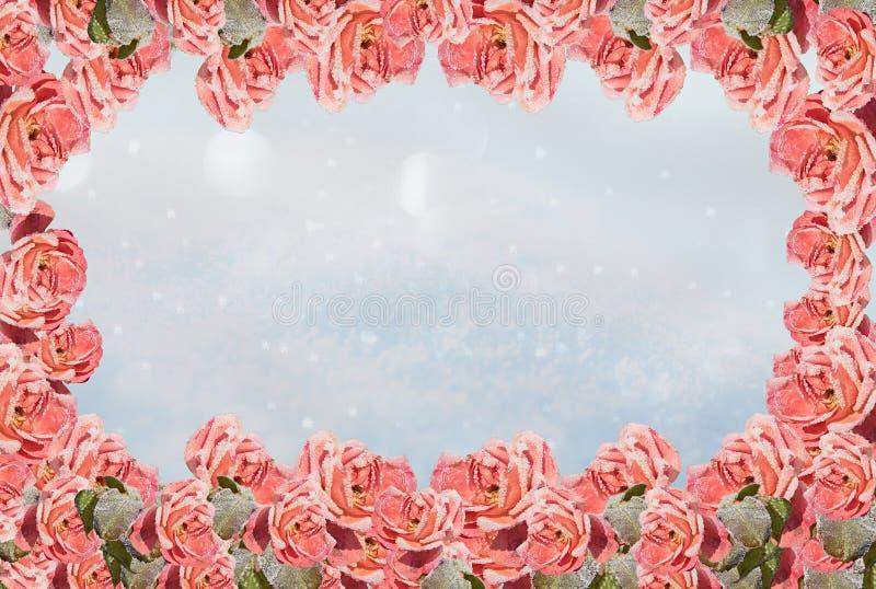 Vinterbakgrund med ramen av frostiga rosor arkivfoton