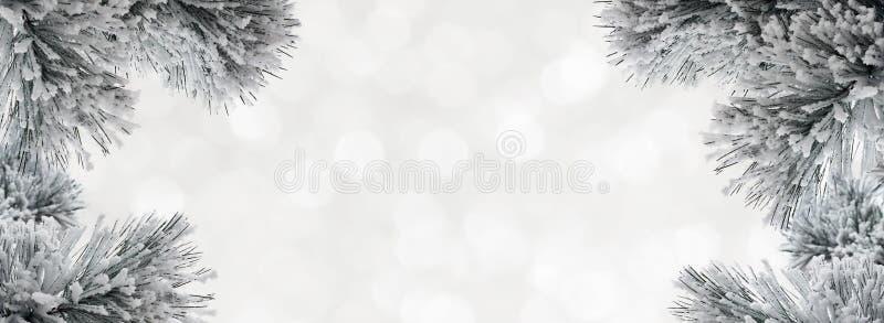 Vinterbakgrund med snö-täckt sörjer filialer royaltyfri foto