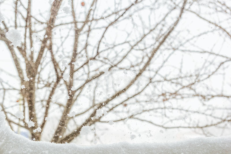 Vinterbakgrund med snö-täckt trädgårds- utanför fönstret royaltyfria foton