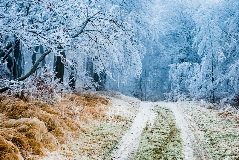 Vinterbana som går till och med djupfryst skog fotografering för bildbyråer