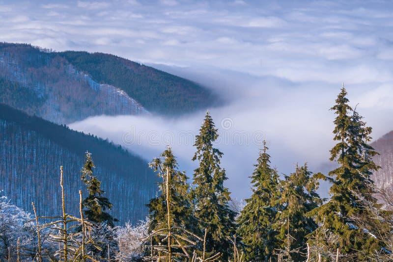 Vinterberglandskap med dimma i dalen, Pustevny royaltyfri foto