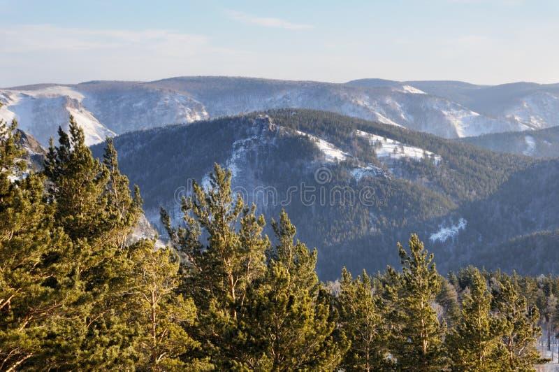 Vinterberglandskapet med snöig berg som täckas med, sörjer trädskogen under solnedgång arkivfoton
