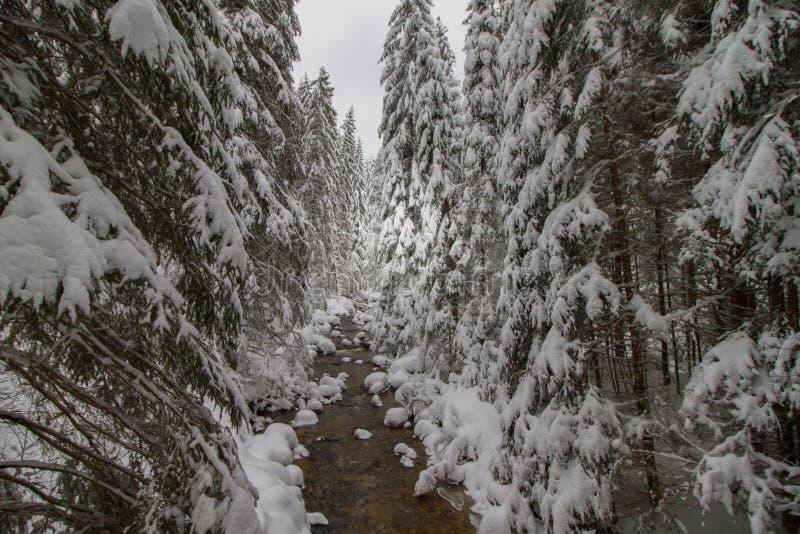 Vinterbergströmmen med vaggar i skogen som täckas av snö royaltyfri fotografi