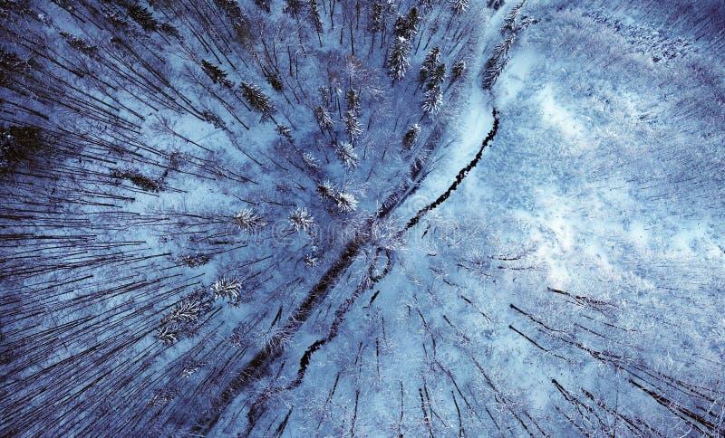 Vinterbergväg i blått royaltyfria foton