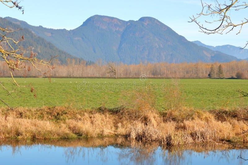 Vinterbetesmark och berg vid liten vik royaltyfria bilder