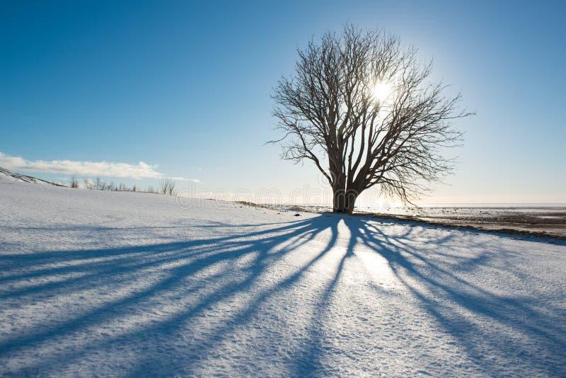 Vinterdag, träd med skugga och sol, Island royaltyfri fotografi
