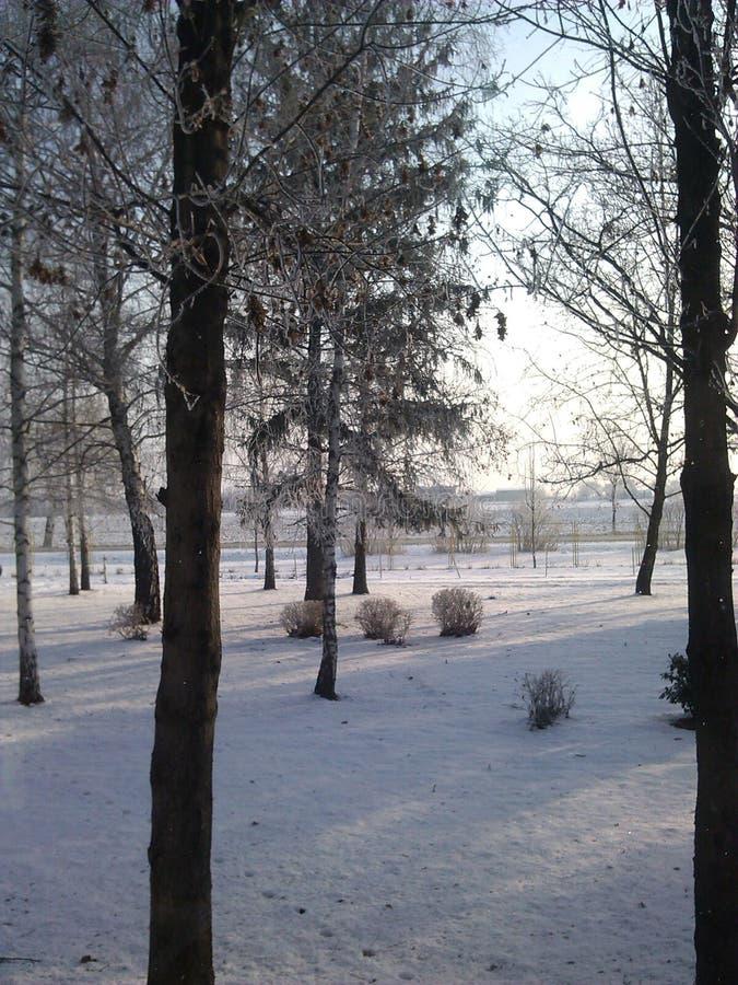 Vinterdagar arkivbilder