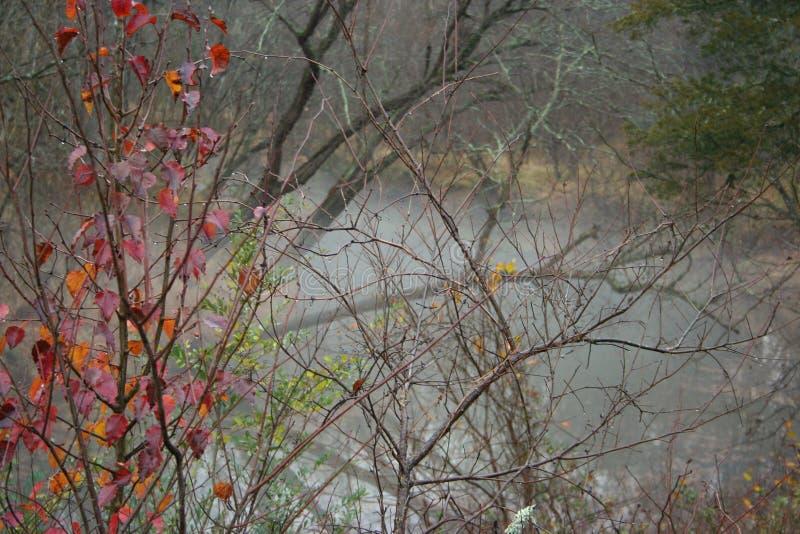 Vinterdimma över en flod arkivbild