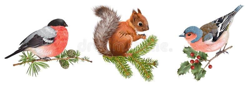 Vinterdjuruppsättning med fåglar och ekorren royaltyfri illustrationer