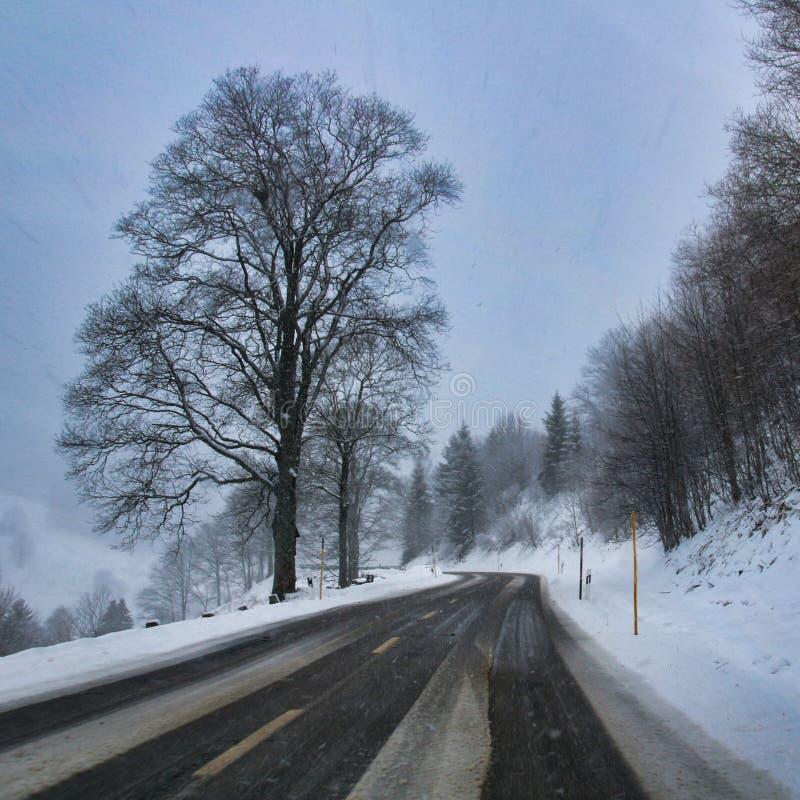 Vinterdrev för svart skog till och med fallande snö arkivbilder