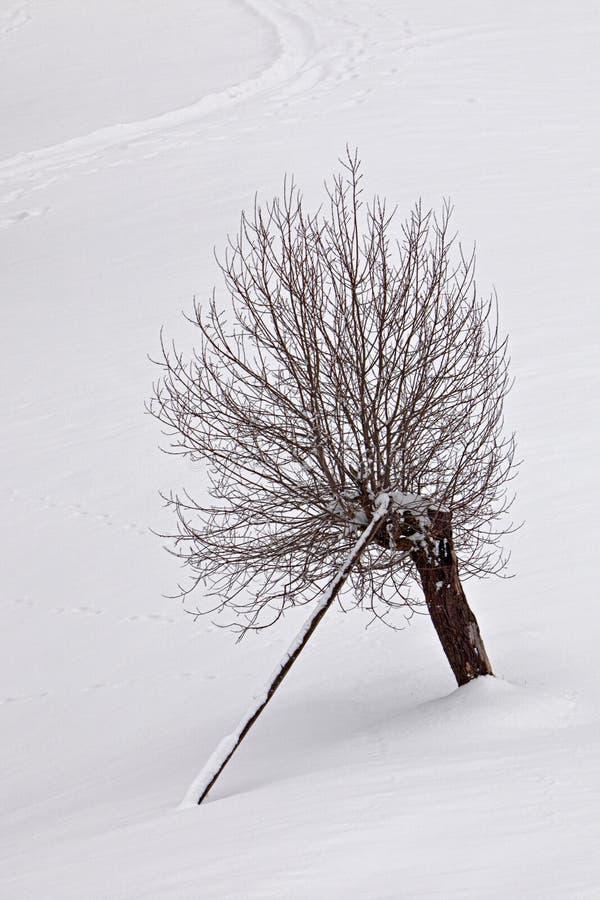 Vinterensamhet royaltyfri fotografi