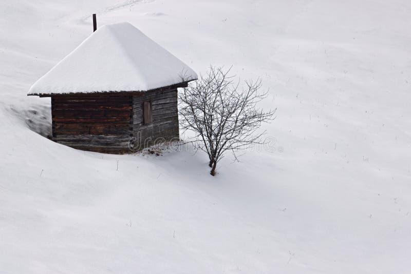 Vinterensamhet med treen och stugan royaltyfri foto
