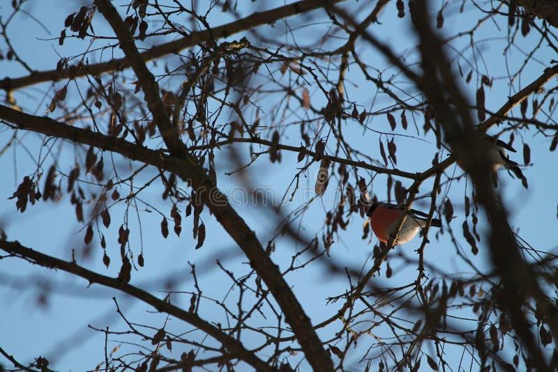 Vinterfågel royaltyfri fotografi