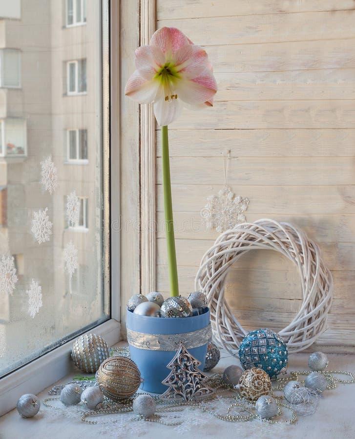 Vinterfönster med rosa Hippeastrum royaltyfri foto