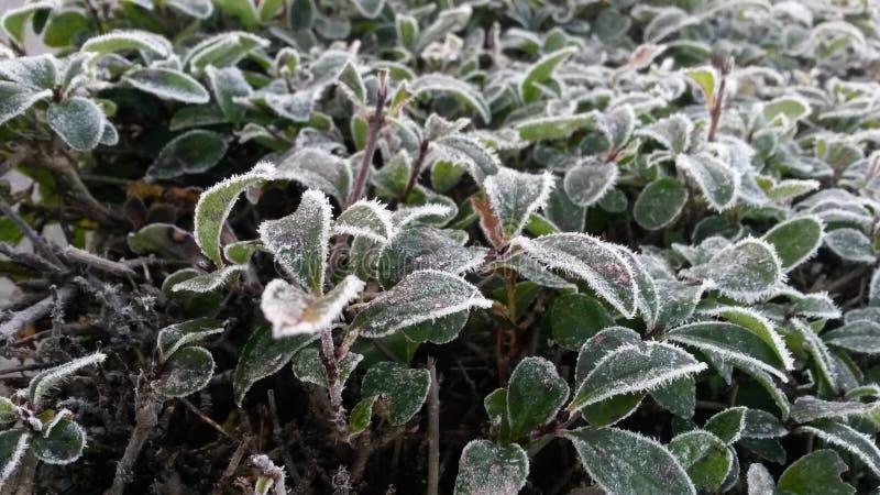 Vinterförkylning arkivbild