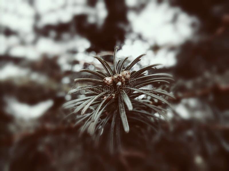 Vinterfel arkivfoto