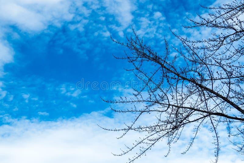 Vinterfilialer och en blå himmel fotografering för bildbyråer